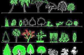 园林立面植物图例CAD