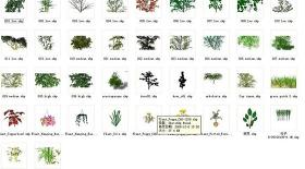 sketchup3d植物圖片