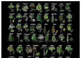 原創國外精品樹樹葉植物CAD素材-版權可商用