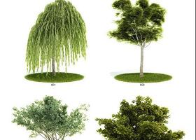 植物3dmax模型匯