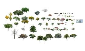 精品免费景观植物树组合SU模型下载 精品免费景观植物树组合SU模型下载