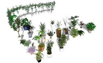 精品免费盆栽花盆爬藤植物组合SU模型下载 精品免费盆栽花盆爬藤植物组合SU模型下载