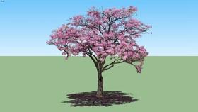 树 草图大师模型SU模型下载 树 草图大师模型SU模型下载
