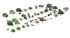 精品免费好用的树灌木植物组合SU模型下载 精品免费好用的树灌木植物组合SU模型下载