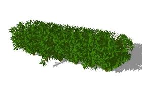 灌木SU模型下载 灌木SU模型下载