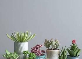 现代多肉植物盆栽组合3d模型下载 现代多肉植物盆栽组合3d模型下载