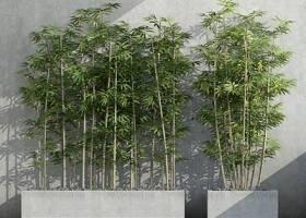 现代室外竹子3D模型下载 现代室外竹子3D模型下载