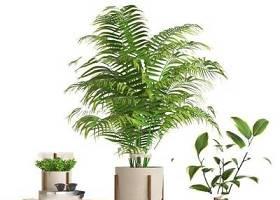 现代室内植物盆景角几摆件组合3D模型下载 现代室内植物盆景角几摆件组合3D模型下载