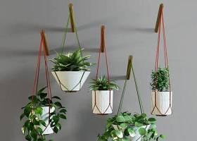 现代绿萝吊篮盆栽组合3D模型下载 现代绿萝吊篮盆栽组合3D模型下载