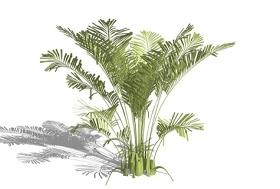 3D棕榈科植物SU模型下载 3D棕榈科植物SU模型下载