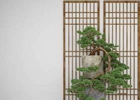 中式松树盆栽3D模型下载 中式松树盆栽3D模型下载