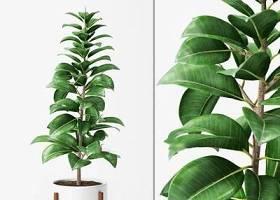 现代盆栽植物国外模型 现代 植物 盆栽3D模型下载 现代盆栽植物国外模型 现代 植物 盆栽3D模型下载