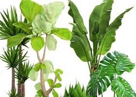 现代植物盆栽组合3D模型下载 现代植物盆栽组合3D模型下载