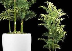 现代散尾葵植物3D模型下载 现代散尾葵植物3D模型下载
