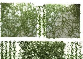 现代爬山虎绿植藤蔓3D模型下载 现代爬山虎绿植藤蔓3D模型下载