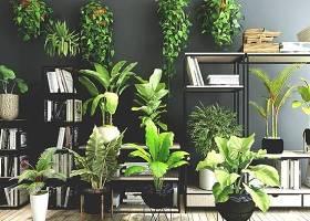 现代植物盆栽花架书架植物组合3D模型下载 现代植物盆栽花架书架植物组合3D模型下载
