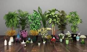 现代兰花百合玫瑰绿植盆栽组合3D模型下载 现代兰花百合玫瑰绿植盆栽组合3D模型下载
