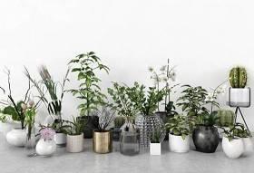 现代仙人掌绿植盆栽花瓶插花组合3D模型下载 现代仙人掌绿植盆栽花瓶插花组合3D模型下载