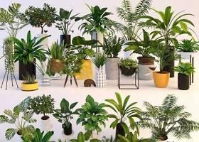 现代陶瓷绿植盆栽组合3d模型下载 现代陶瓷绿植盆栽组合3d模型下载
