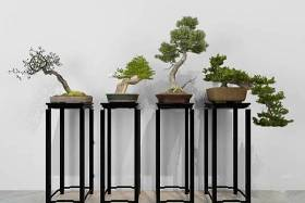 中式花架松树盆景盆栽组合3D模型下载 中式花架松树盆景盆栽组合3D模型下载