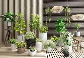 植物盆栽吊兰绿植组合3D模型下载 植物盆栽吊兰绿植组合3D模型下载