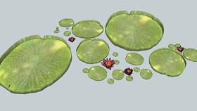水生植物睡莲,3D,花园,水,花, 其他 网球 画 盘子 饰品 SU模型下载 水生植物睡莲,3D,花园,水,花, 其他 网球 画 盘子 饰品 SU模型下载