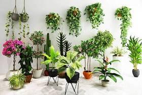 现代花艺盆栽吊兰绿植组合3D模型下载 现代花艺盆栽吊兰绿植组合3D模型下载