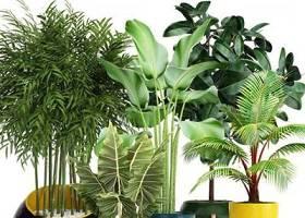 现代苏铁竹子绿植盆栽组合3D模型下载 现代苏铁竹子绿植盆栽组合3D模型下载