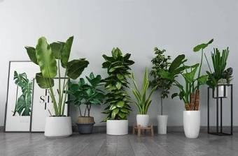 植物盆栽 北欧绿植 盆栽 植物3D模型下载 植物盆栽 北欧绿植 盆栽 植物3D模型下载