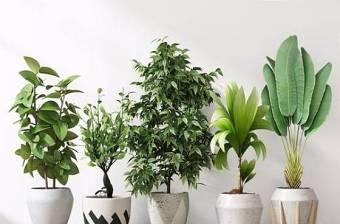 盆栽植物组合 现代绿植 盆栽 绿植 花艺 花盆3D模型下载 盆栽植物组合 现代绿植 盆栽 绿植 花艺 花盆3D模型下载