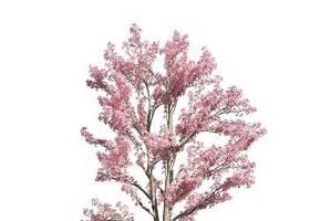 現代櫻花樹3D模型下載下載 現代櫻花樹3D模型下載下載
