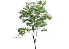 現代室外樹3d模型下載 現代室外樹3d模型下載
