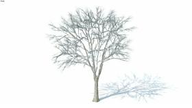 低维3D树木冬季(027) 画 植物 迷雾 其他 家居物品 SU模型下载 低维3D树木冬季(027) 画 植物 迷雾 其他 家居物品 SU模型下载